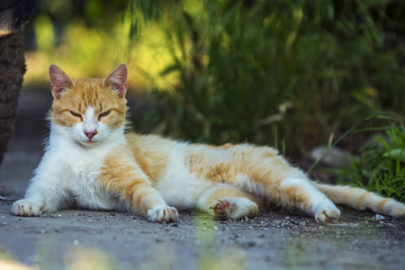 Stray cat laying on street