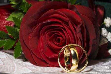 red rose: Red rose and wedding rings