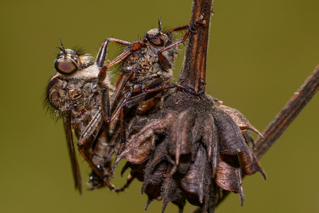 Close up of two flies on soft background