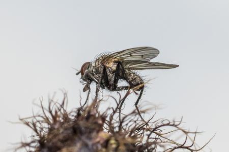 Ugly fly on a green flower