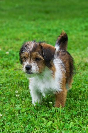 Alma , cute playful dog posing for camera