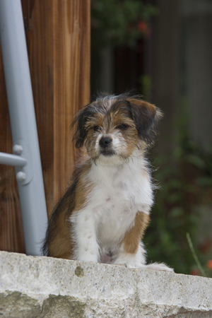 mammalia: Alma , cute playful dog posing for camera