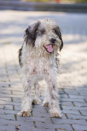 mammalia: Cute playful dog posing for camera Stock Photo