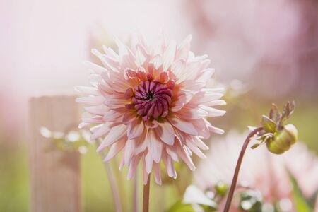 Beautiful flower isolated on garden background