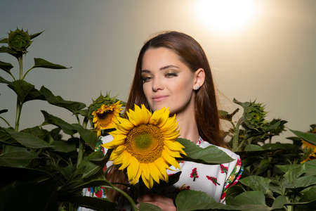Beautiful young girl posing at sunset in a sunflower field Banque d'images