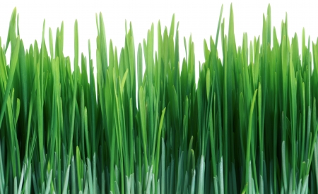 Green Grass Close Up That Seamlessly Tiles Horizontally Isolated On White