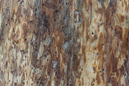 living organisms: bark beetle wooden texture backgroud, wallpaper