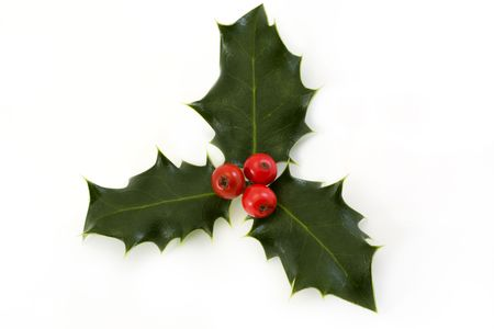 holly leaves: sprig of holly with berries on a white background