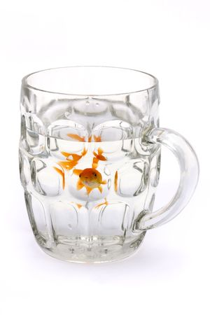 goldfish in a glass beer tankard over white