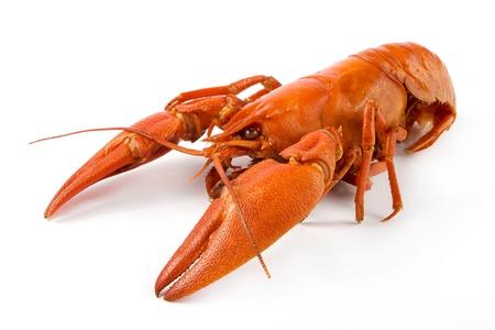 crayfish: Boiled crawfish on a white background