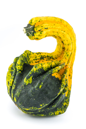 Unusually shaped green and yellow autumn squash.