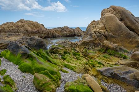 Rock pool covered in green seaweed.