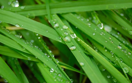 drops on a green grass photo
