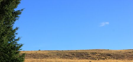 steppe surounded by a fir under blue sky