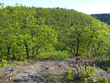 soli: a hiking trail in the green wood