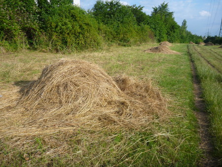 heaps: heaps of dry hay on a green meadow Stock Photo