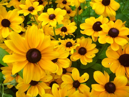 yello: a beautiful yello flower decorative background