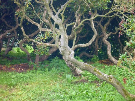 genealogical: curly branches of a small tree in a green park Stock Photo