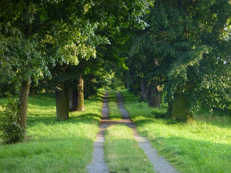 walk in closet: a small sandy road through a green forest