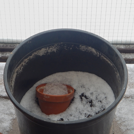 replanting: forgotten empty flower pot on a balcony with snow