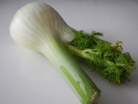 a single piece of fresh green fennel