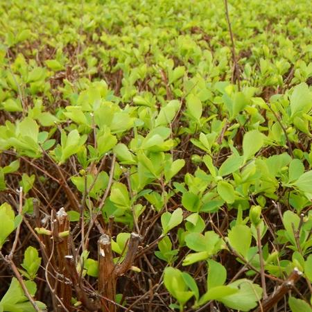 saint paddy's: a green plant in a fresh spring sun