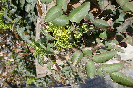 paddys day: a green plant in a fresh spring sun