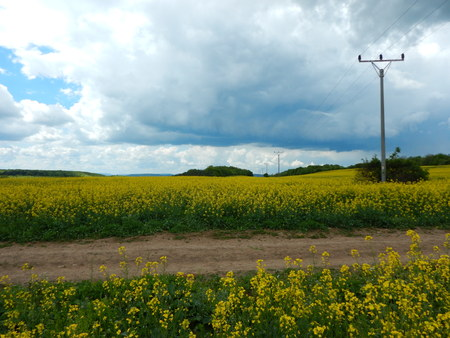 a countryside landscape with yellow canola oil field Stock Photo