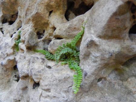 a detail of a green plant growing in a hole in a rock Stock Photo