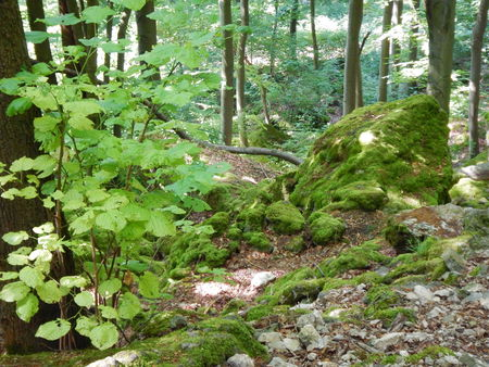 a forest with trees and green leaves Stock Photo