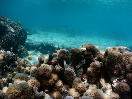 snorcheling on a beautiful colorful coral reef in sea