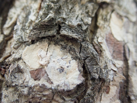 a closedetail of a wood skin texture