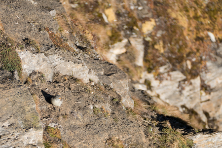tiny cute bird on a rock in mountains