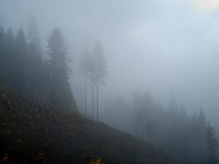 a misty autumn weather in the alpine nature Stockfoto