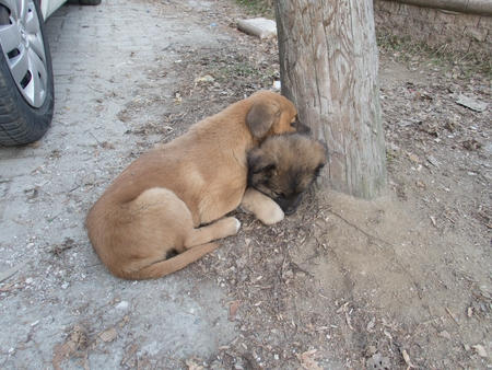 a cute young wild dog on a street Stock fotó