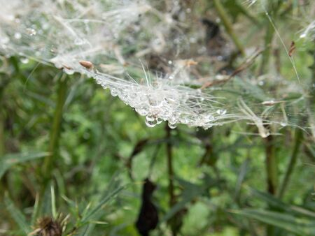 a close detail of a spider web on a green plant Imagens