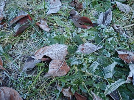 frozen dry autumn leaves on the grass under a tree