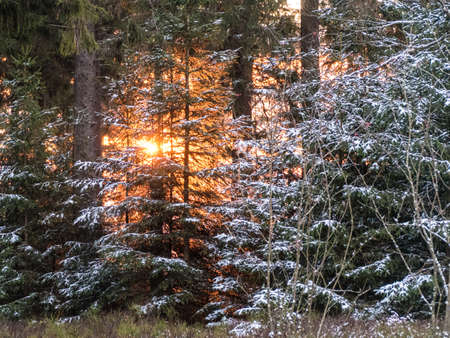 freezing beginning of a winter in the forest