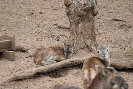 couple of little deer in a zoo nature