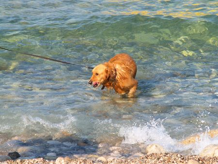 mamma: Red dog in waves and splashes