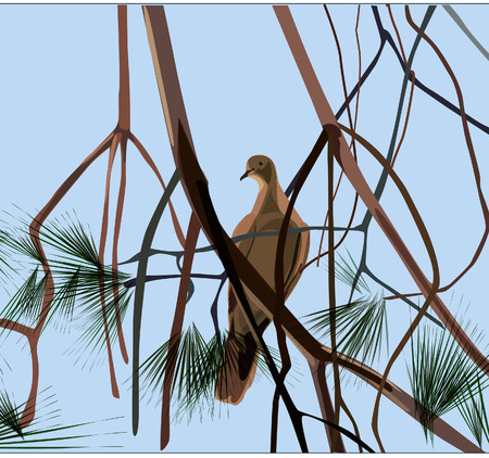 pine branch: White Bird on pine branch - Vector illustration