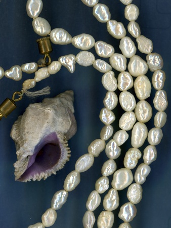 perls: Perl necklace, and shelll