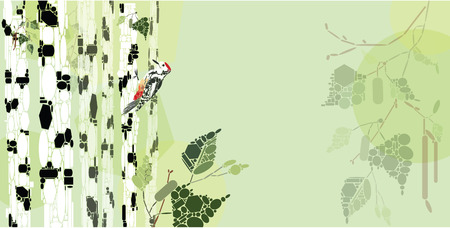 birch forest: Woodpecker in a birch forest composition with copy space