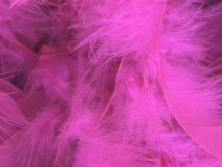 fluffy: Soft and fluffy pink feather background Stock Photo