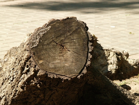 sity: Stump in sity park