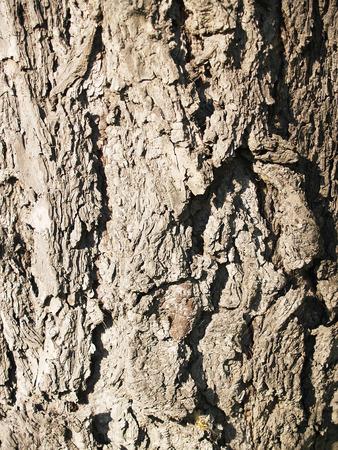 crinkles: The beautiful  bark of tree with deep crinkles