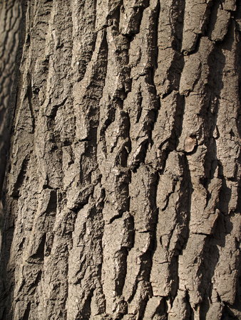 bark carving: The beautiful wooden bark sunlit background Stock Photo
