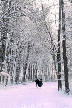 couple winter: A couple walking in park in winter.