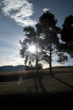 Sunshine passing through a tree with blue sky background. Italian Alps, Trentino region.