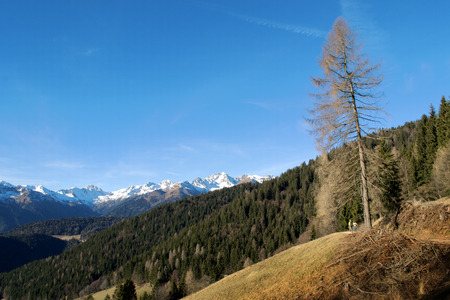 Two hikers observe a leafless tree in the italians alps, in the Alto AdigeSudtirol region.